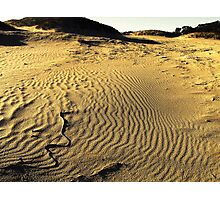 mallee sanddrift Photographic Print
