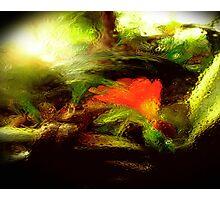gardens through glass.. Photographic Print