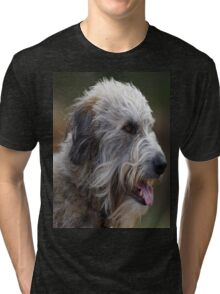 Irish Wolf Hound  Tri-blend T-Shirt