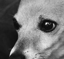 Pensive Puppy by Megs D