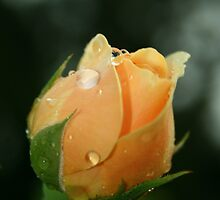 One Perfect Rose by Briana McNair