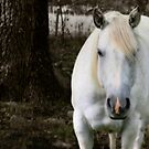 White Horse Pink Blaze by Wayne King