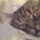 Merlin in Bokeh by Rowan  Lewgalon