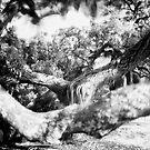 beachlands grove by dennis william gaylor