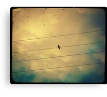 Like a bird on a wire... Canvas Print