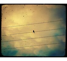 Like a bird on a wire... Photographic Print