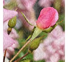 A Pretty Pink Bud Photographic Print