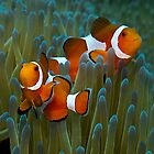 Underwaterpics from Indonesia, The Philippines & Malaysia by Marcel Botman