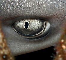 Eye of a Whitetip Reef Shark by M.M.S.W. Botman
