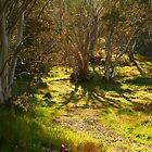 Morning, Dinner Plain Victorian High Country by Joe Mortelliti