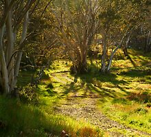 Morning, Dinner Plain Victorian High Country by Joe Mortelliti