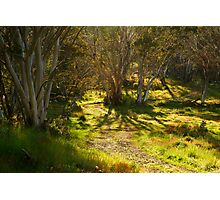 Morning, Dinner Plain Victorian High Country Photographic Print