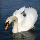swan lake 1 by justgem