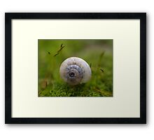 Floating On A Bed Of Moss II Framed Print