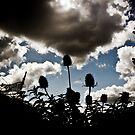 Sky Tweezles by dozzie