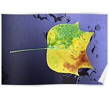 tricolored leaf Poster