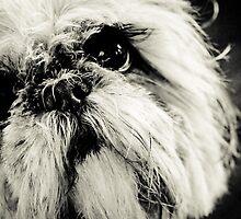 My Lola by Pat Shawyer
