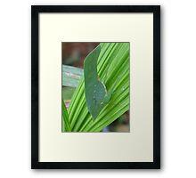 Leaf Insect Framed Print
