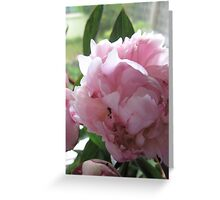 Soft Pink Beauty no-3 Greeting Card