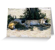 Lazy lions Greeting Card