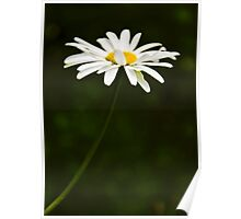 The Beauty of Daisy Poster