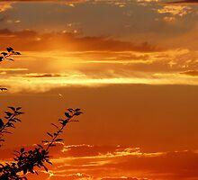orange sunset by tego53