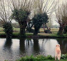 View near Flatford, UK  by Anita52