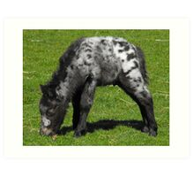 Miniature Shetland Foal Art Print