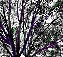 Study in Light and Shadow: Branches, Sky, and Foliage in Black and White With Touches of Color by Ivana Redwine