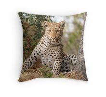 Male Leopard - Okavango Delta, Botswana Throw Pillow