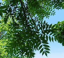 Canopy of Leaves by BlueMoonRose