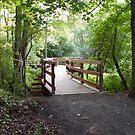 Walk bridge on Coakley's Island by linmarie
