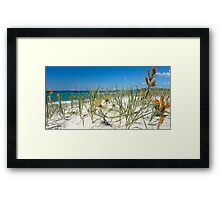 Spinifex on the dunes Framed Print