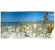 Spinifex on the dunes Poster