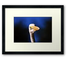 The Great Egret of Florida Framed Print