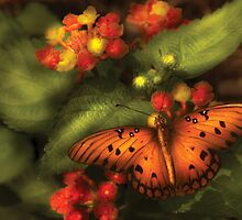 Butterfly - Heliconius  by Mike  Savad