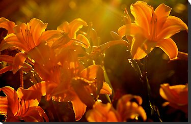 Orange Flowers Light by Tamela J Wolff