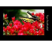 A TIGER BY THE TAIL Photographic Print