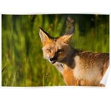A Bonus Fox Poster