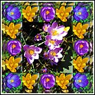 Crocus Collage in Mirrored Frame by BlueMoonRose