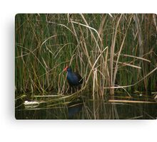 Wildlife At The Regional Park. Wanneroo Canvas Print
