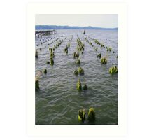 Piling sprouts Art Print