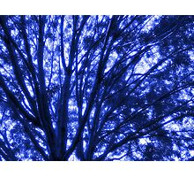 Study in Light and Shadow: Branches, Sky, and Foliage in Blue Photographic Print