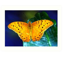 Cruiser Butterfly Art Print