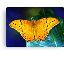 Cruiser Butterfly Canvas Print