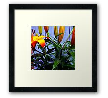 The First To Open Framed Print
