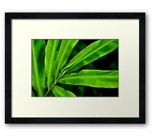 Green Scale Framed Print