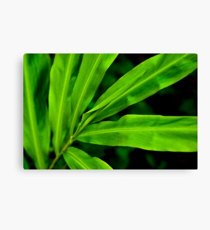 Green Scale Canvas Print