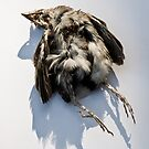 Poor Little Dead Bird by Ilva Beretta