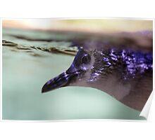 Penguin Underwater Poster